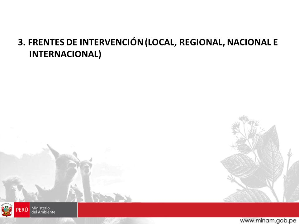 3. FRENTES DE INTERVENCIÓN (LOCAL, REGIONAL, NACIONAL E INTERNACIONAL)