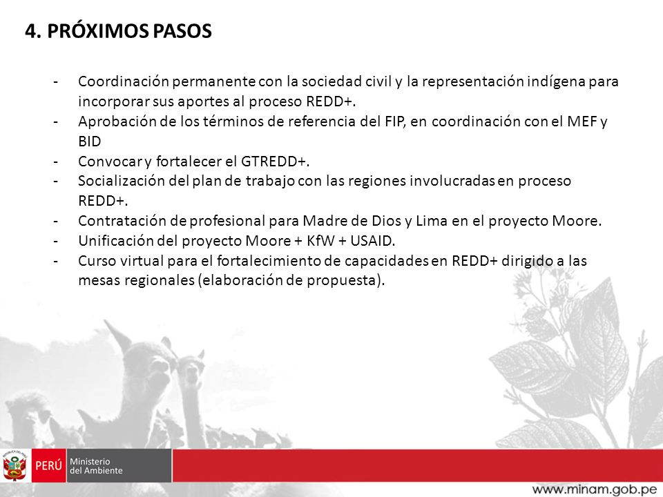 4. PRÓXIMOS PASOS Coordinación permanente con la sociedad civil y la representación indígena para incorporar sus aportes al proceso REDD+.