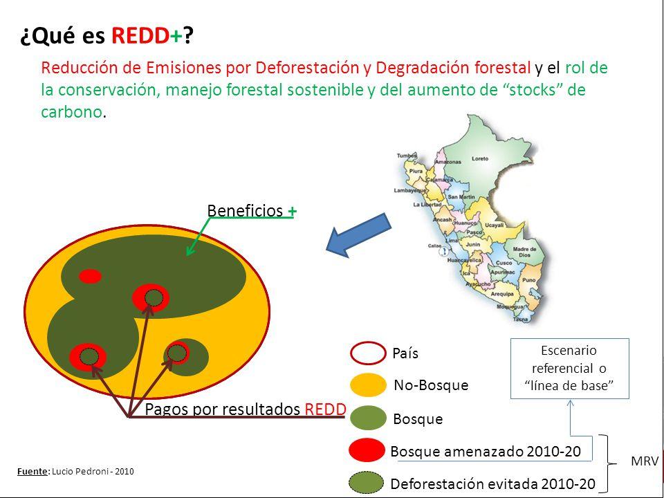 ¿Qué es REDD+