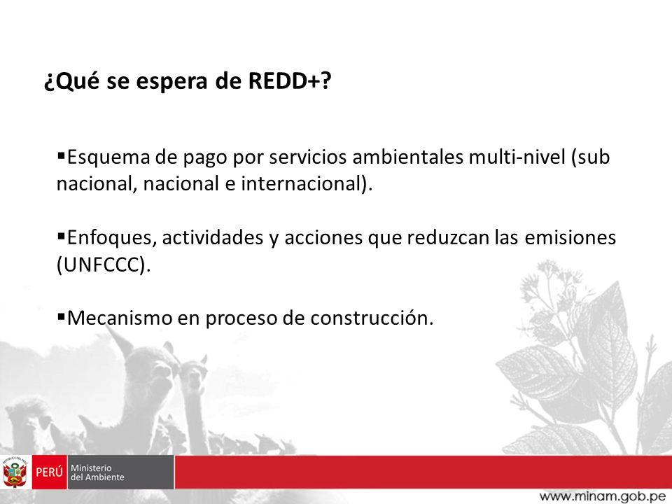 ¿Qué se espera de REDD+ Esquema de pago por servicios ambientales multi-nivel (sub nacional, nacional e internacional).