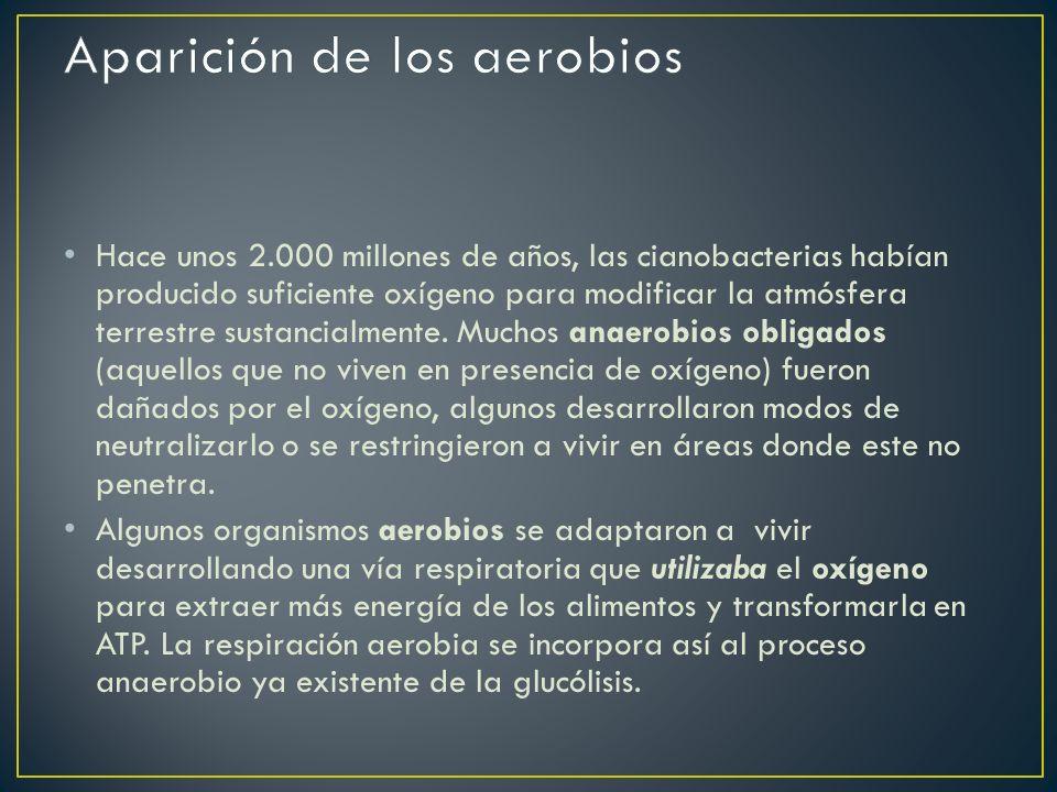Aparición de los aerobios