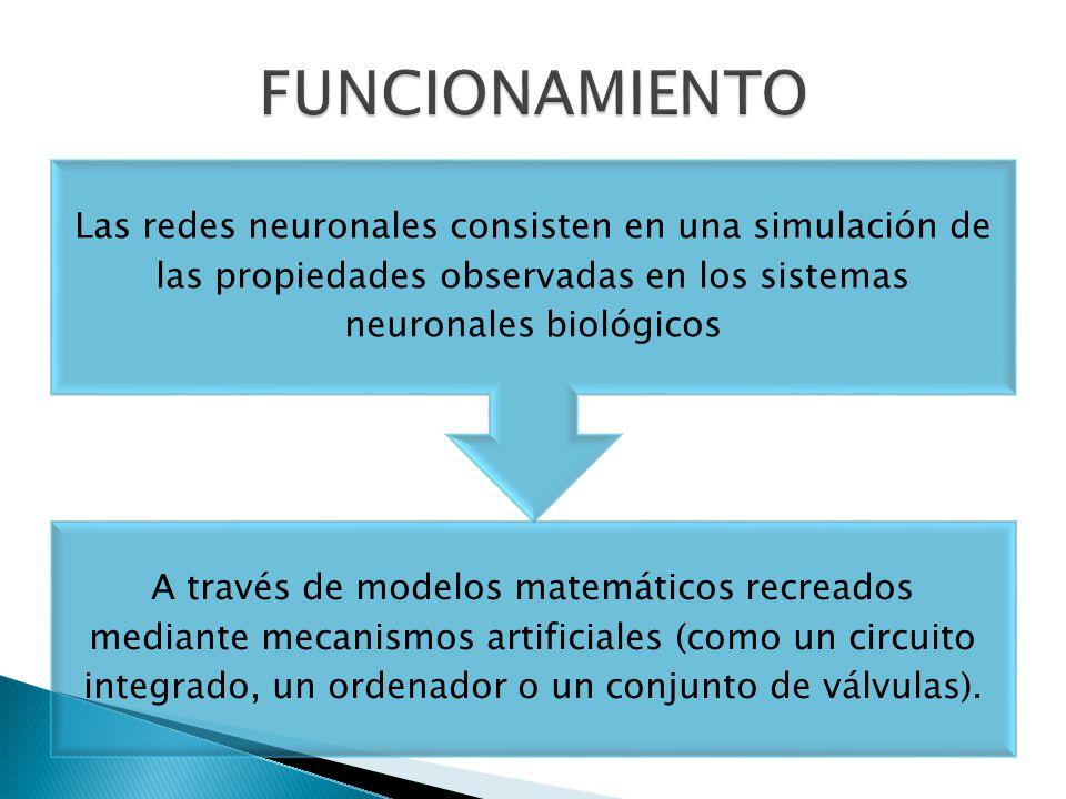 FUNCIONAMIENTO Las redes neuronales consisten en una simulación de las propiedades observadas en los sistemas neuronales biológicos.