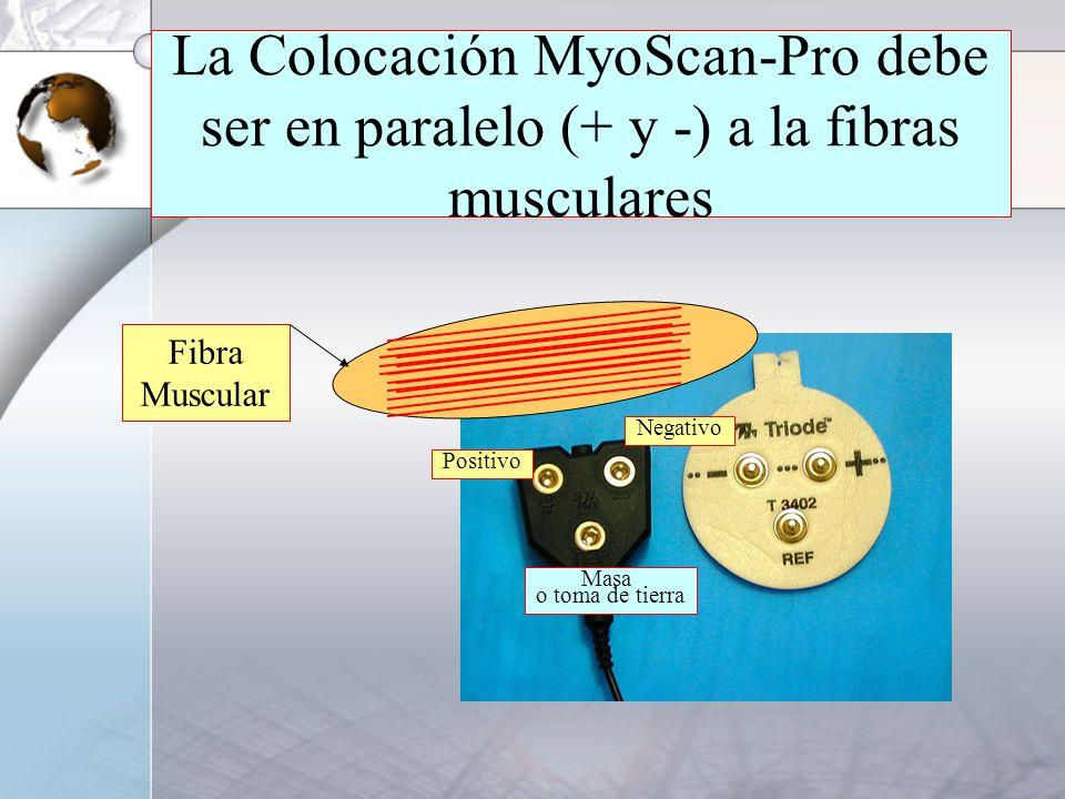 La Colocación MyoScan-Pro debe ser en paralelo (+ y -) a la fibras musculares