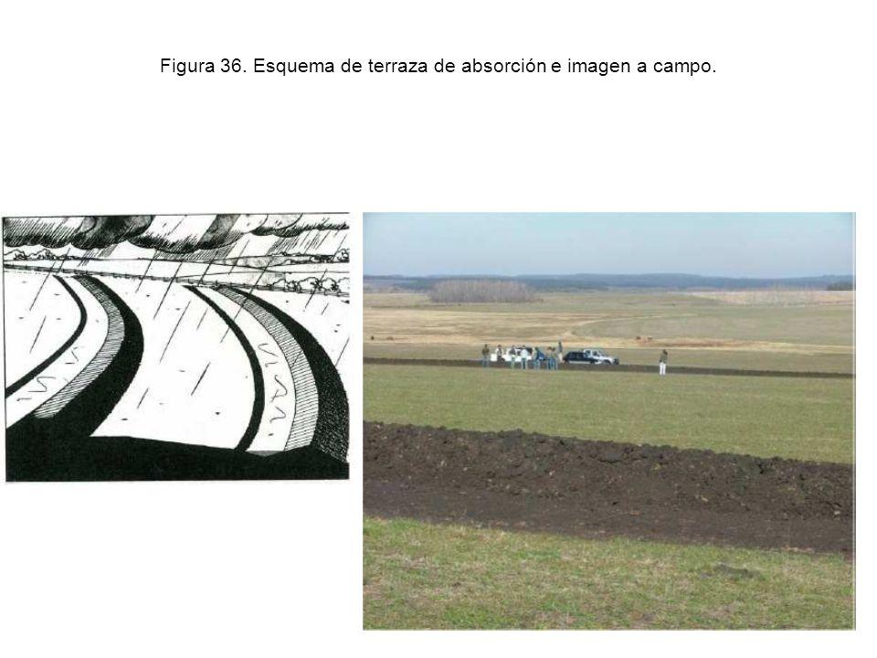 Figura 36. Esquema de terraza de absorción e imagen a campo.