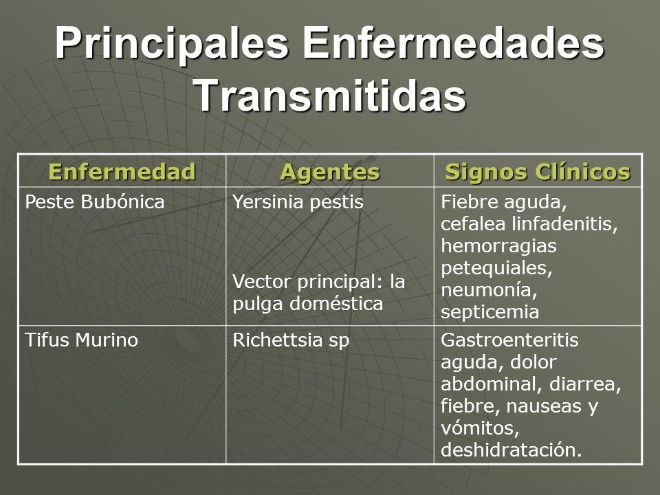 Principales Enfermedades Transmitidas