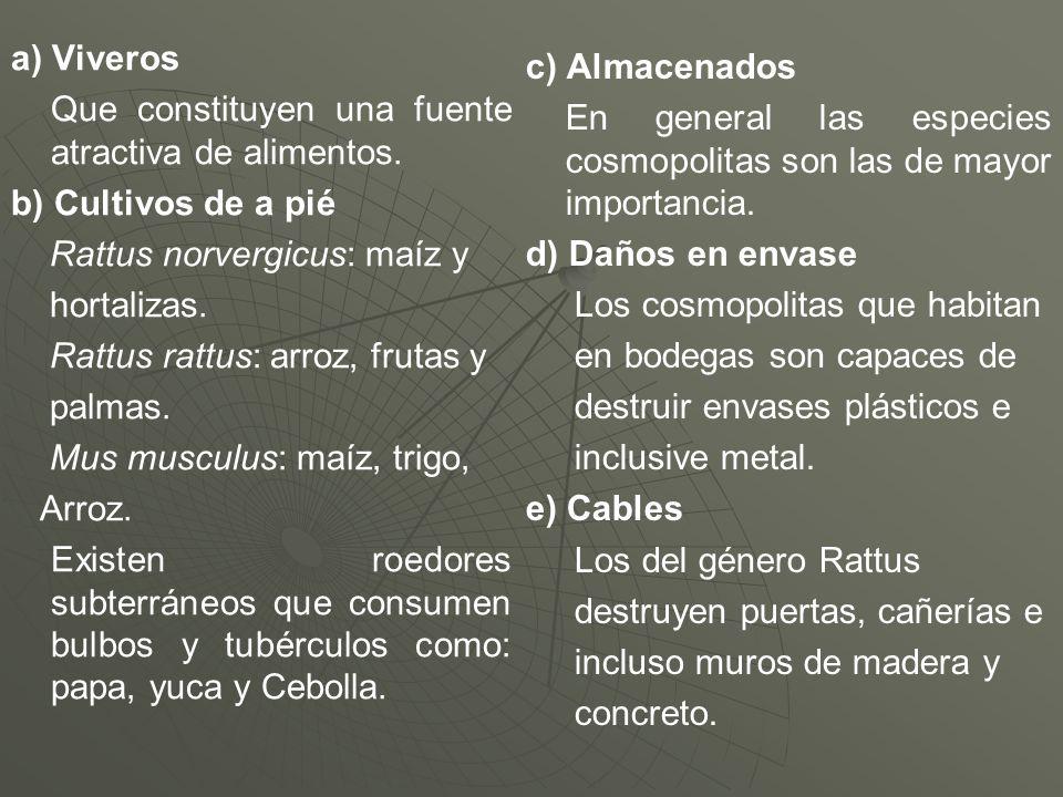 a) Viveros Que constituyen una fuente atractiva de alimentos. b) Cultivos de a pié. Rattus norvergicus: maíz y.