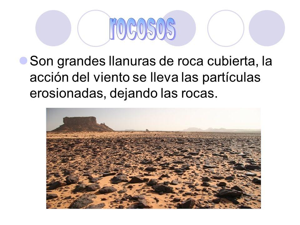 rocosos Son grandes llanuras de roca cubierta, la acción del viento se lleva las partículas erosionadas, dejando las rocas.