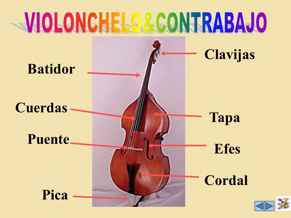 VIOLONCHELO&CONTRABAJO