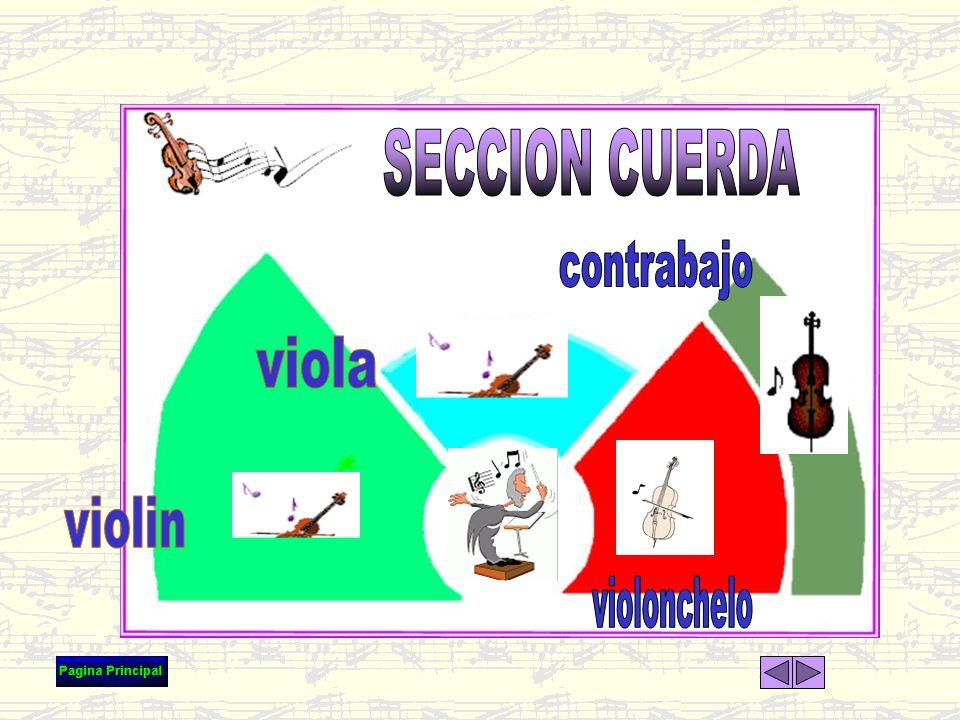 SECCION CUERDA contrabajo viola violin violonchelo