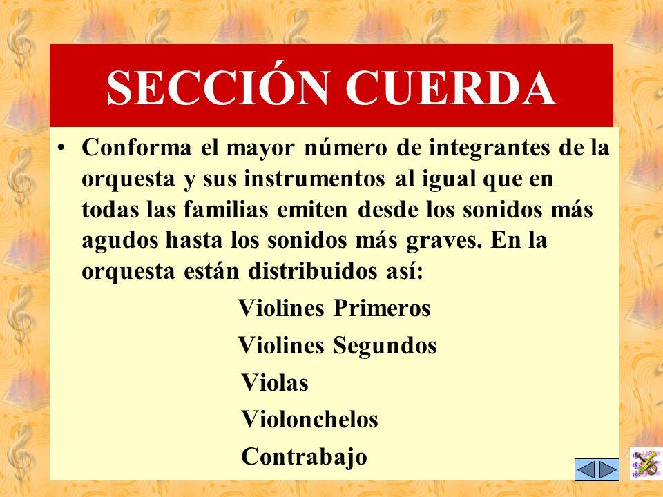 SECCIÓN CUERDA