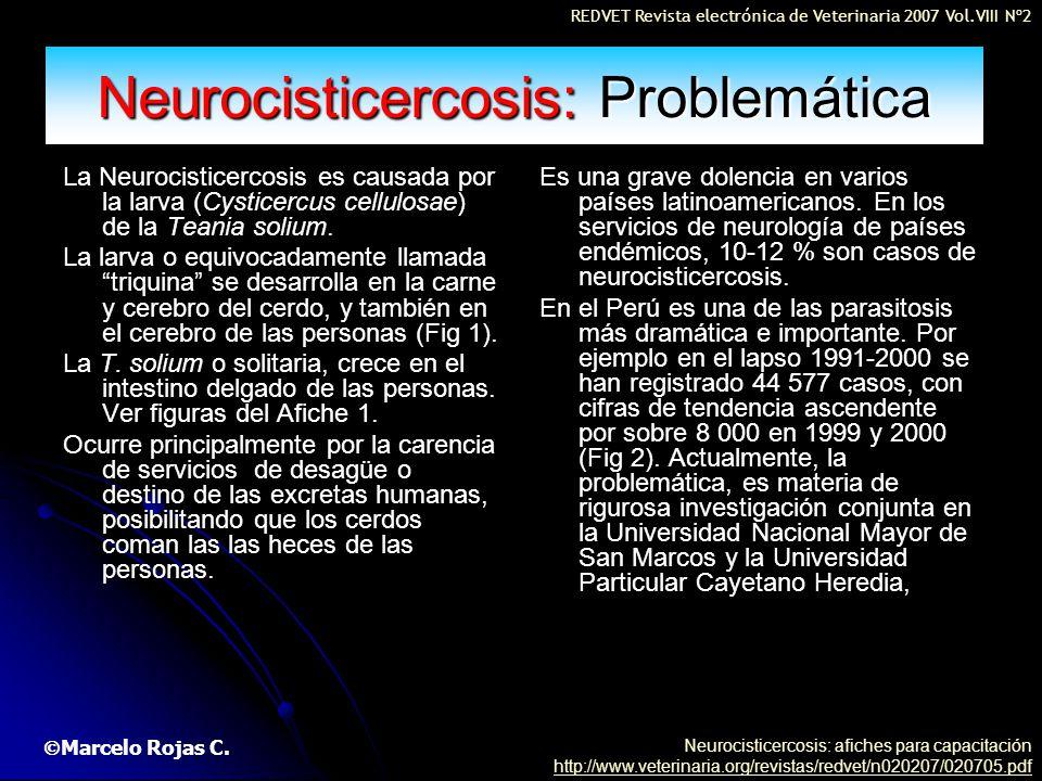 Neurocisticercosis: Problemática