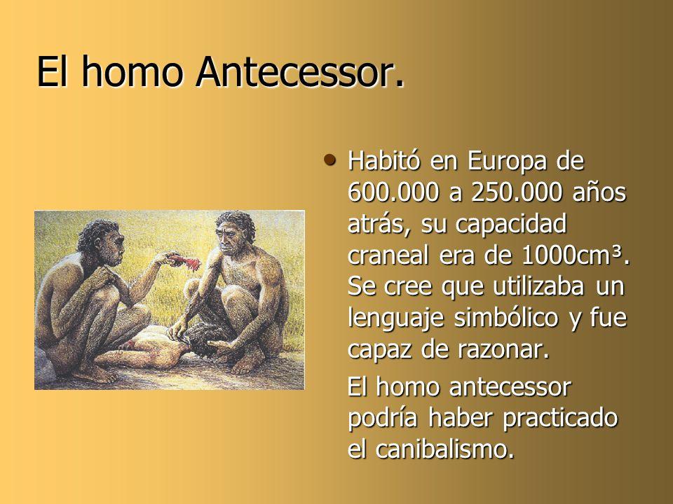 El homo Antecessor.