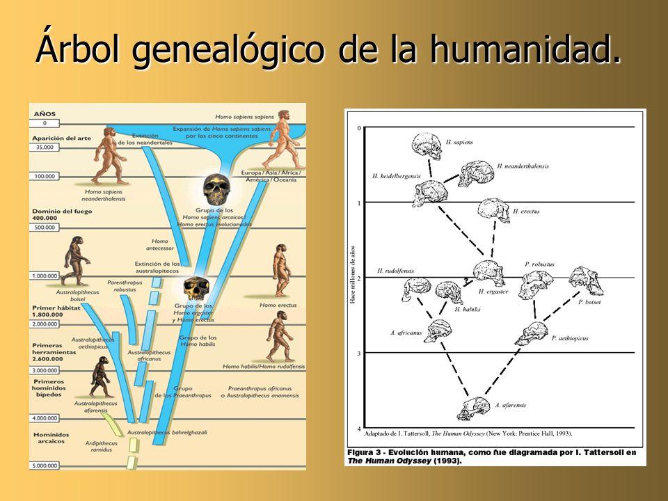 Árbol genealógico de la humanidad.
