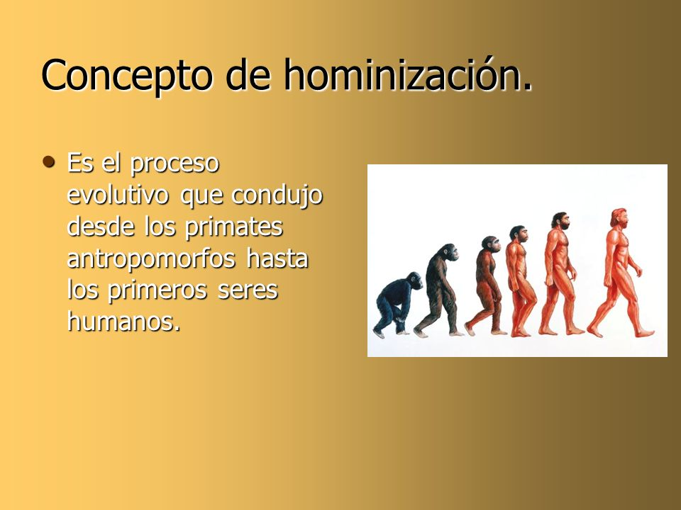 Concepto de hominización.