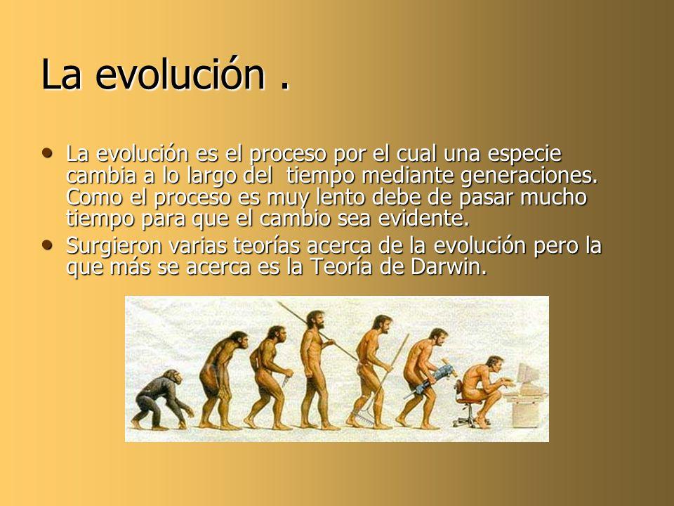 La evolución .