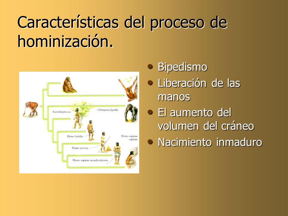 Características del proceso de hominización.