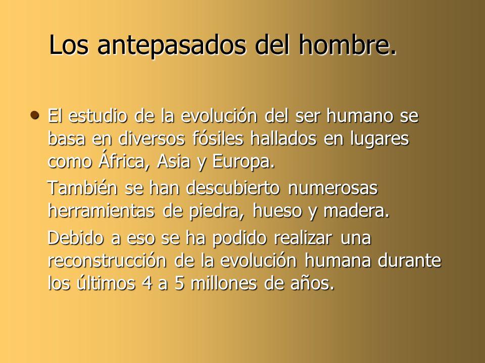 Los antepasados del hombre.