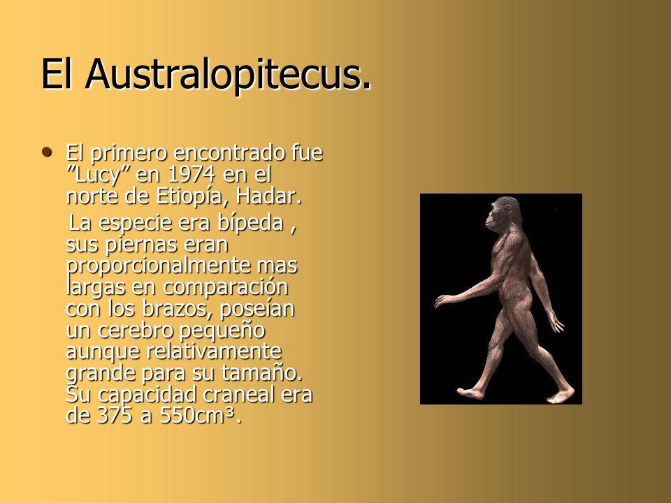 El Australopitecus. El primero encontrado fue Lucy en 1974 en el norte de Etiopía, Hadar.
