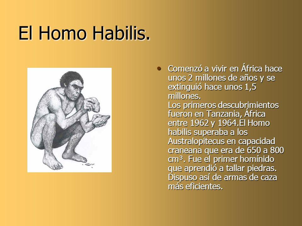 El Homo Habilis.