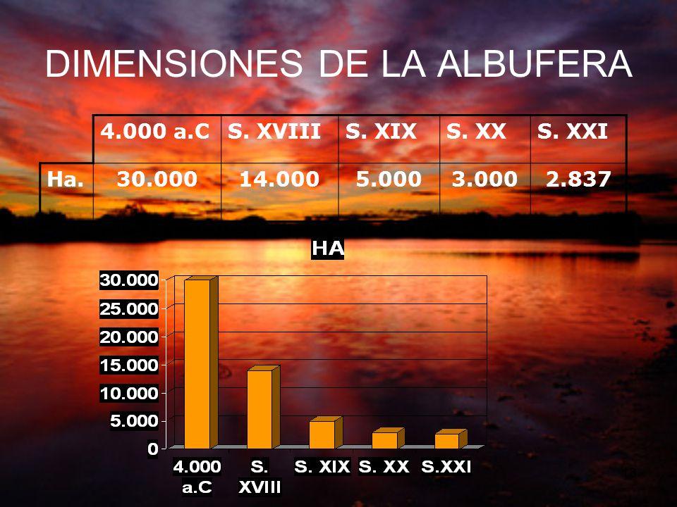 DIMENSIONES DE LA ALBUFERA