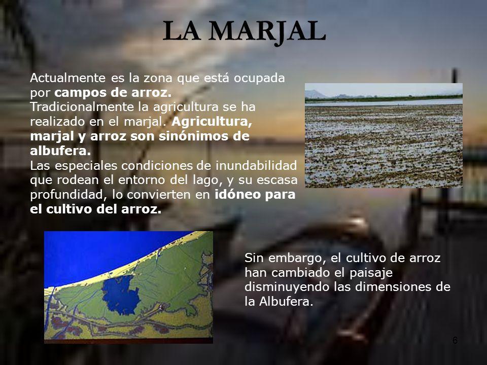 LA MARJAL Actualmente es la zona que está ocupada por campos de arroz.
