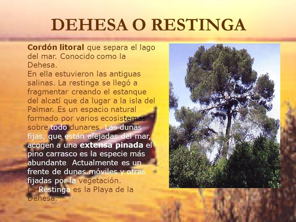 DEHESA O RESTINGA Cordón litoral que separa el lago del mar. Conocido como la Dehesa.