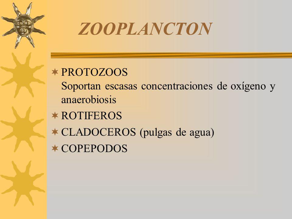 ZOOPLANCTON PROTOZOOS Soportan escasas concentraciones de oxígeno y anaerobiosis.