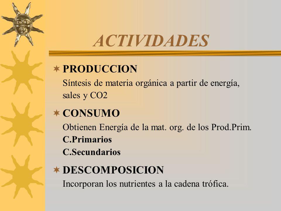 ACTIVIDADES PRODUCCION Síntesis de materia orgánica a partir de energía, sales y CO2.