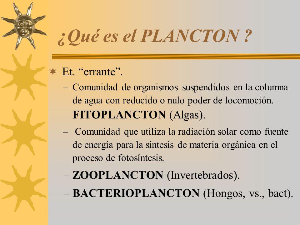 ¿Qué es el PLANCTON Et. errante . ZOOPLANCTON (Invertebrados).