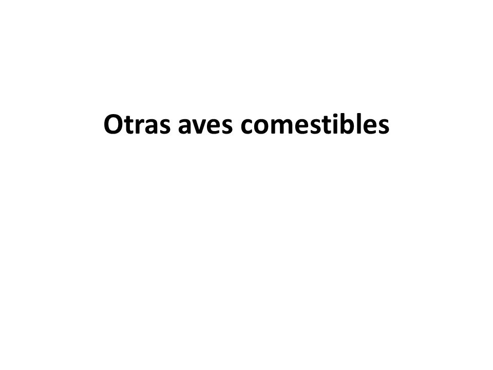 Otras aves comestibles