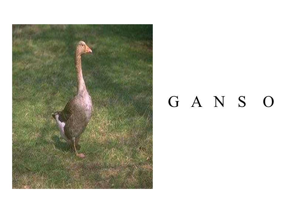 G A N S O