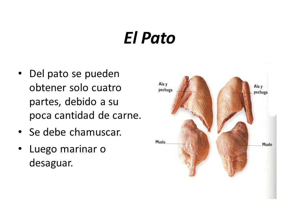 El Pato Del pato se pueden obtener solo cuatro partes, debido a su poca cantidad de carne. Se debe chamuscar.