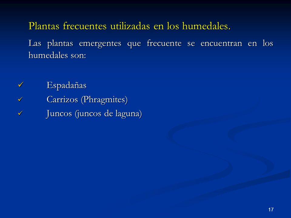 Plantas frecuentes utilizadas en los humedales.