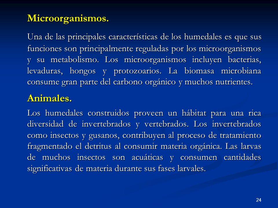 Microorganismos.