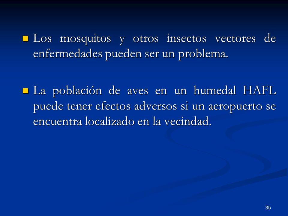 Los mosquitos y otros insectos vectores de enfermedades pueden ser un problema.