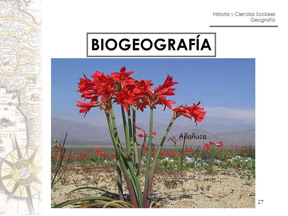 BIOGEOGRAFÍA Añañuca