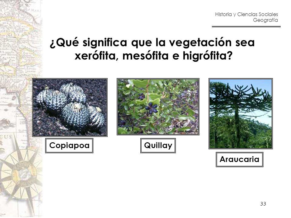 ¿Qué significa que la vegetación sea xerófita, mesófita e higrófita
