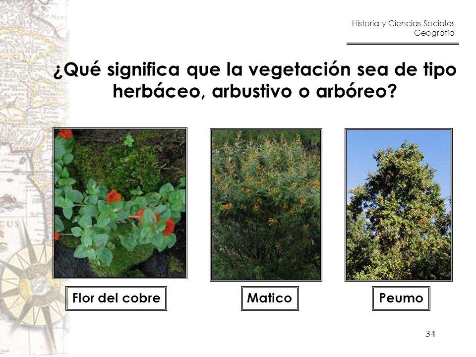 ¿Qué significa que la vegetación sea de tipo
