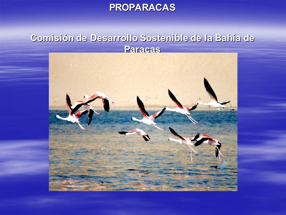 PROPARACAS Comisión de Desarrollo Sostenible de la Bahía de Paracas