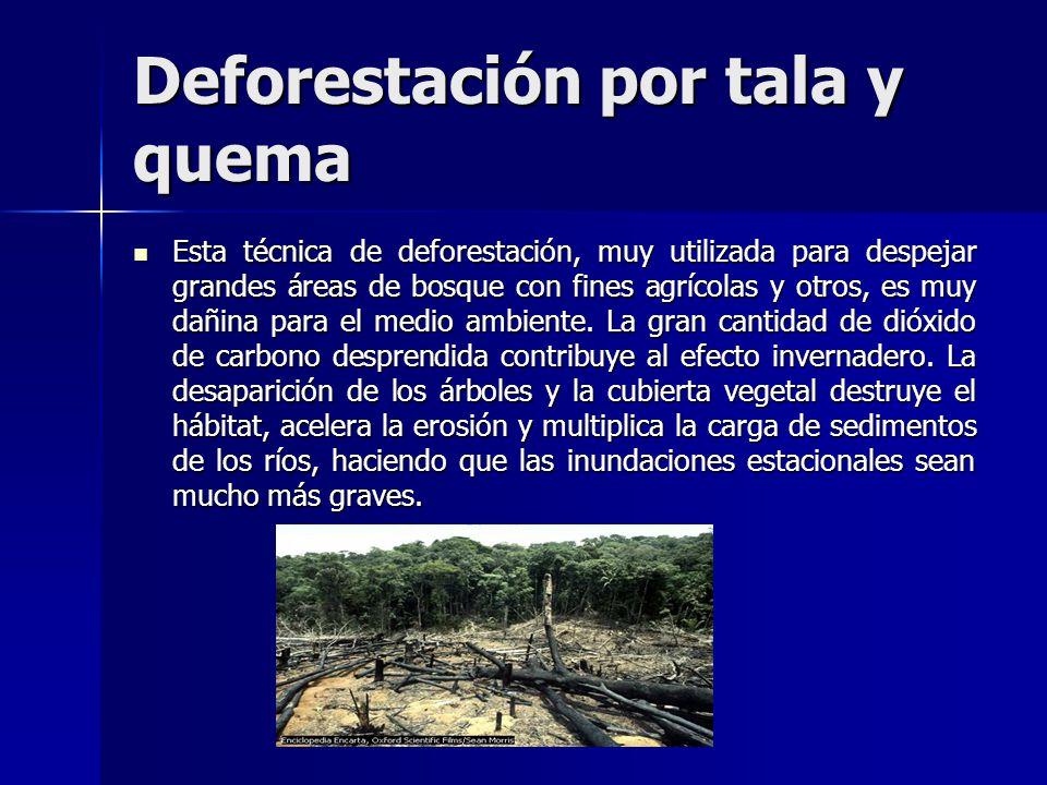 Deforestación por tala y quema