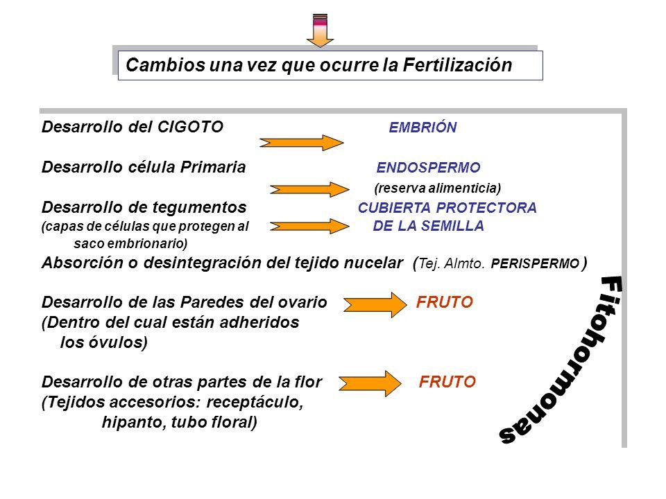 Fitohormonas Cambios una vez que ocurre la Fertilización