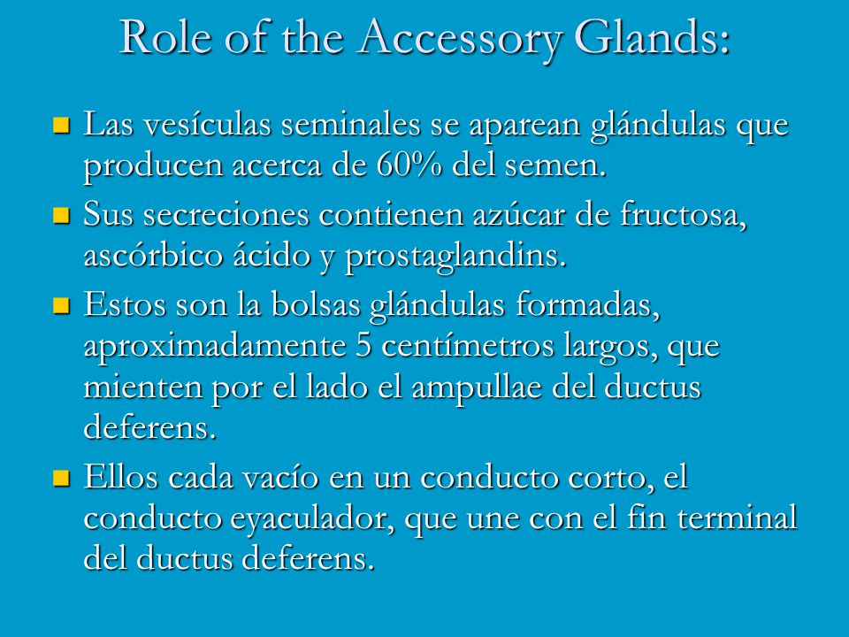 Role of the Accessory Glands: