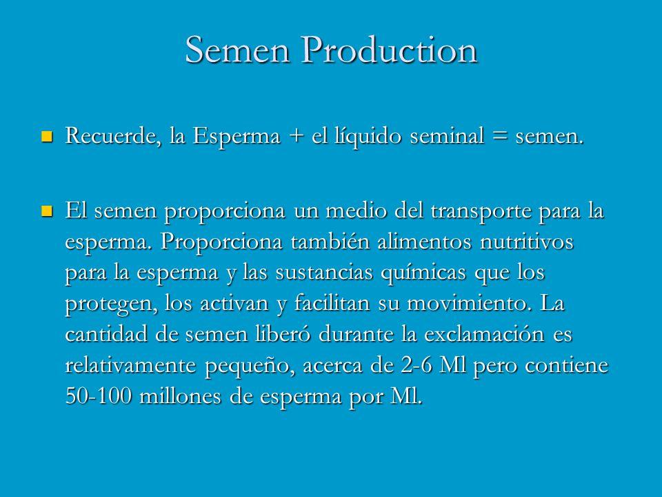 Semen Production Recuerde, la Esperma + el líquido seminal = semen.