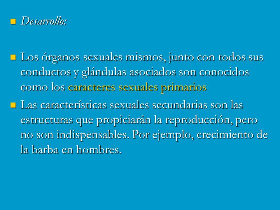 Desarrollo: Los órganos sexuales mismos, junto con todos sus conductos y glándulas asociados son conocidos como los caracteres sexuales primarios.