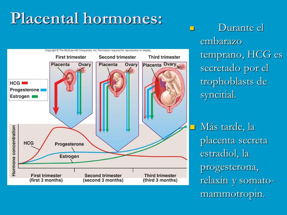 Placental hormones: Durante el embarazo temprano, HCG es secretado por el trophoblasts de syncitial.