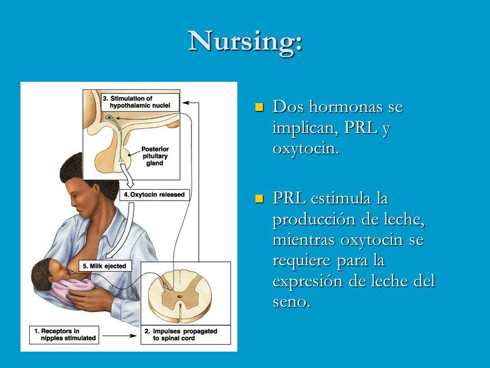 Nursing: Dos hormonas se implican, PRL y oxytocin.