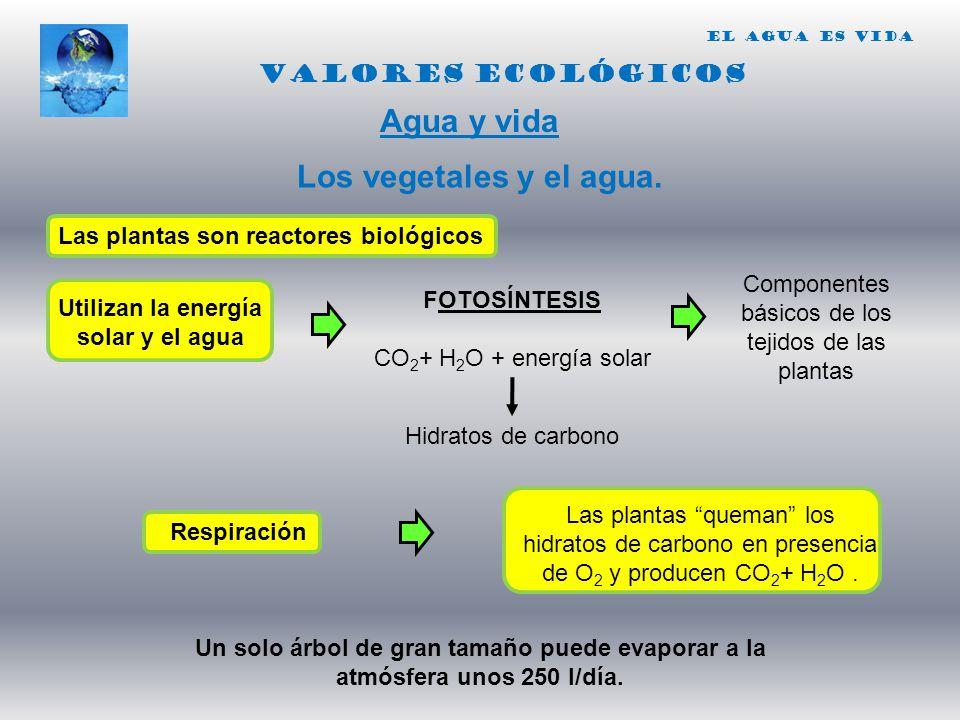 Utilizan la energía solar y el agua