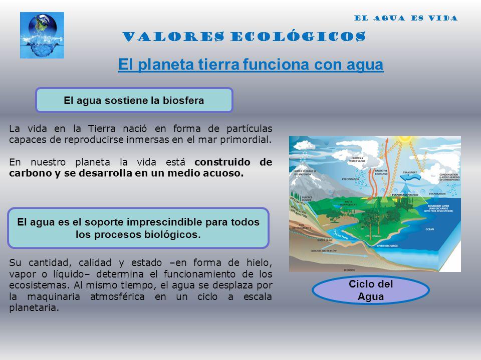 El agua sostiene la biosfera