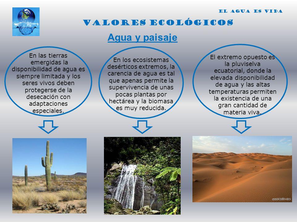 Agua y paisaje VALORES ECOLÓGICOS En las tierras