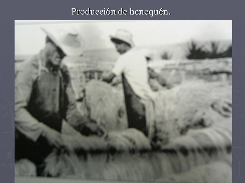 Producción de henequén.